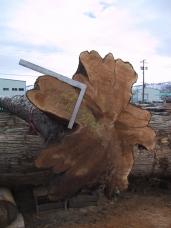 Massive Cedar building log